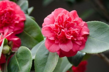 15-flower-jpg